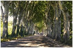 Bonne route -  Good road (diaph76) Tags: extérieur france ardèche route road voitures cars ombre shadows conduite conduct arbres trees feuilles leaves paysage landscape