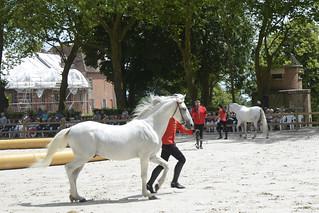 2018.06.21.051 HARAS du PIN - Spectacle équestre, présentation des chevaux