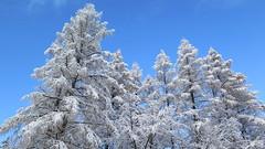 Zakopane-November'17 (97) (Silvia Inacio) Tags: zakopane poland polska snow neve winter inverno tree árvore polónia