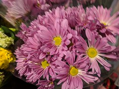 Safeway Flowers (earthdog) Tags: 2018 flower shopping plant safeway grocerystore googlepixel pixel androidapp moblog cameraphone purple