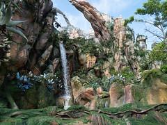 1608 Disney's Animal Kingdom18 (nooccar) Tags: 1806 animalkingdom devonadams devoncadams devonchristopheradams disney disneyworld disneysanimalkingdom june june2018 devoncadamscom devoncadamsgmailcom
