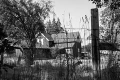 Farmhouse Goats View BW (Don Thoreby) Tags: chehalis chehaliswashington farms farming barns weatheredbarns sheds farmequipment barnyards farmanimals horse horses goats hayrakes oldhayrakes outbuildings outhouse