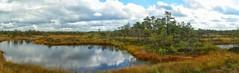 Rabalaugas / Bog pool, raised bog, Estonia (Veeseire) Tags: raba laugas loodusblogi loodus veeblogi veeseireee veeveeb eesti estonia minest minestee