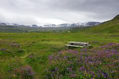 Day 7: Hornvík bay (Northern Adventures) Tags: iceland icelandic north deepnorth nature adventure outdoors outdoor scenery scenic wild wilderness rugged view viewpoint hornstrandir hornbjarg hornvík hornvik hike hiking walk walking trek trekking trcak tracking backpacking wandering trip journey exploration