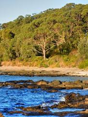 On the island IX (elphweb) Tags: hdr highdynamicrange nsw australia seaside sea ocean water beach sand sandy brouleeisland island rock rocks rockformation