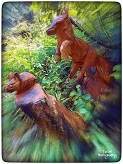 Enchanted forest (tatianalovera) Tags: lupo zoom topo mouse forest foresta legno wood italy italia revello piemonte piedmont wolf luoo