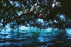 (homesickATLien) Tags: 35mm film art kodak expired mjuiii olympus analog travel backpacking backpacker asia nature volcano lake spirituality heal therapuetic healing properties ripple
