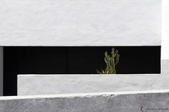 Chovet pauline_IMG_1969 (Pauline Chovet) Tags: architecture archigraphique architecturegraphique darchitecture minimalisme minimaliste graphisme graphique photographie canoneos6d détail design noirblanc black white cactus fuerteventura