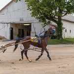 Red Mile stable thumbnail