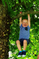 Dylan hanging after climbing a tree. Kids having fun never miss the action. (AspirePhotography1) Tags: tree hanging climbing kids boy hangout happy