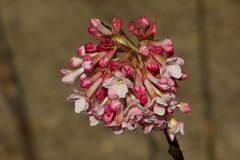 IMG_0792 (Lightcatcher66) Tags: blütenundpflanzen florafauna makros lightcatcher66