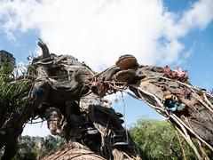 1608 Disney's Animal Kingdom8 (nooccar) Tags: 1806 animalkingdom devonadams devoncadams devonchristopheradams disney disneyworld disneysanimalkingdom june june2018 devoncadamscom devoncadamsgmailcom