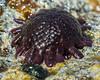 Kauai Sea Urchin (strjustin) Tags: urchin macro kauai hawaii