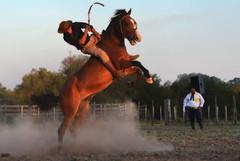 Marcelo Soares (Eduardo Amorim) Tags: gaúcho gaúchos gaucho gauchos cavalos caballos horses chevaux cavalli pferde caballo horse cheval cavallo pferd crioulo criollo crioulos criollos cavalocrioulo cavaloscrioulos caballocriollo caballoscriollos pampa campanha fronteira bagé riograndedosul brésil brasil sudamérica südamerika suramérica américadosul southamerica amériquedusud americameridionale américadelsur americadelsud cavalo 馬 حصان 马 лошадь ঘোড়া 말 סוס ม้า häst hest hevonen άλογο brazil eduardoamorim gineteada jineteada