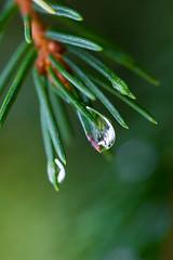 nature jewel (iwona.kilichowska) Tags: macro dof bokeh water drop raindrop droplet green outside