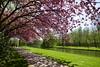 Pink (~~Nelly~~) Tags: mechelen vrijbroekpark lente printemps spring roze pink bloesem
