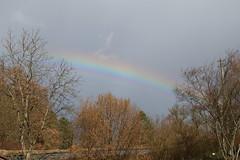 (T)rainbow (dididumm) Tags: train railwayline railroadtracks rain sky tree trees rainbow spring frühling regenbogen bäume baum himmel regen schienen bahnlinie bahn zug
