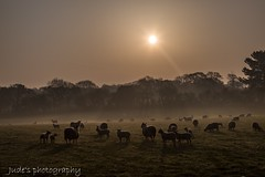 Woolly Silouette (judethedude73) Tags: silhouettes dawn sussex light morning beauty nature landscape sunrise mist