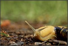 Y Slug