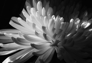 Le blanc et la lumière !