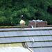 Spaziergang auf dem Dach (06)