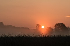 Sunrise over the Marsh (hd.niel) Tags: sunrise earlymorning marsh kingston ontario trees mist fog