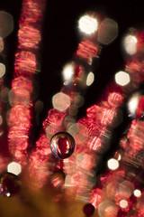 Round Leaved Sundew (Daniel Trim) Tags: drosera rotundifolia round leaved sundew plant bog wet nature photography carnivorous macro flower wales farm wildlife birds super macros mpe 65 canon