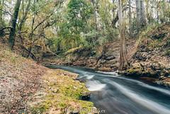 Alapaha Dead River (J. Parker Natural Florida Photographer) Tags: alapaha alapahadeadriver deadrivernd filternd8waterriveroutdoorlandscapescenicnaturenatural beautyvscovsco filmfloridanorth floridadead riverwoodsforestnikon 1nikon v1 mirrorless