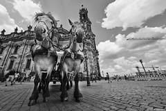Dresden b&w 2 (rainerneumann831) Tags: dresden pferde kran bw blackwhite blackandwhite ©rainerneumann