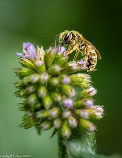 Bee at Work.