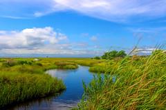 Marsh Creek Grass (dianne_stankiewicz) Tags: marsh creek coastal