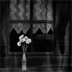 Bonne fête !!! (Des.Nam) Tags: monochrome mono fleur carré square bw blackwhite noiretblanc nb nordpasdecalais nikon 105mmf2 desnam composition fenêtre coca cocacola bois rideaux vase d800 nikond800 analogefex silverefex noir blanc amour