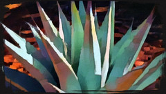 18 000110a Agave Geometry (edit.quill) Tags: agave cactus design dessert sedona plant beauty geometry