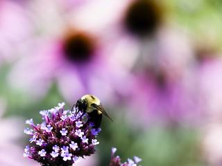Bees and Bokeh