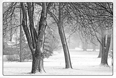 Dear Mother Nature (garywitte845) Tags: winter spring snow storm bw iowa saccounty saccity infared trees