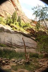 IMG_3729 (Egypt Aimeé) Tags: narrows zion national park canyons pueblos utah arizona
