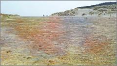 Dunes, plage et la mer du Nord, De Banjaard, Kamperland, Noord-Beveland, Zeelande, Nederland (claude lina) Tags: claudelina nederland paysbas hollande zeeland zélande dunes debanjaard kamperland