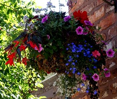 Hanging Basket June 2018 (mrd1xjr) Tags: hanging basket june 2018