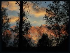006880 2016 3 Oktober Sunset (Photo by Reinier Mensink) (mensinkr) Tags: sunset sky trees forest color evening sun lucht zonsondergang eindedag avondrood