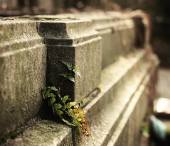 Life finds a way (Peterix) Tags: cemetery graveyard grave fern plant bokeh