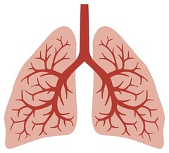 17470038_ml-lungs-circulation (mghresearchinstitute) Tags: vein lobe care lung human tract chest vapor being organ virus tissue throat inhale thorax breath purify health exhale smoking medical trachea disease respire biology anatomy illness vessels bronchi inhaling medicine vitality thoracic circulate pulmonary bronchial breathing biological anatomical respiration respiratory humanlungs healthcare cardiovascular humanorgans lungsanatomy bronchialsystem lungsoftheperson