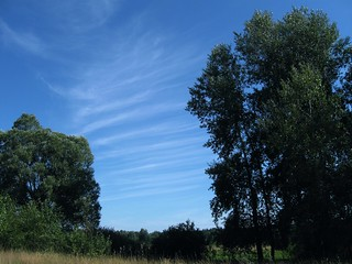 Trees and clouds. Sumy region Ukraine.
