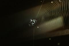 DSC01171 (Yaroshevsky) Tags: spider night nightlight art a7iii sonyalpha sony graph myart