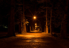 Light Between the Trees (huw_thomas06) Tags: night path road tree trail park wet puddle lamp light city dark trees forest fog alley landscape old autumn architecture nature lights town house sunset line evening darkness glow warm orange black wood street background travel nobody nopeople lantern nikon d750 sigma 35 mm f14 art