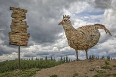 Chicken, Alaska Founded in 1886 by prospectors mining for gold on the nearby Fortymile River. (Freshairphotography) Tags: chickenalaska alaska metalsculpture signpost unique historical history sculpture backroads offtheeatenpath chicken unusual tourism
