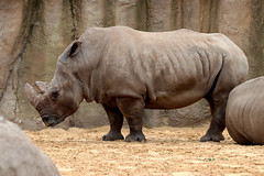 IMG_0796 (Bob_lewerissa) Tags: wildlands emmen zoo canon 80d 70200 l nonis usm