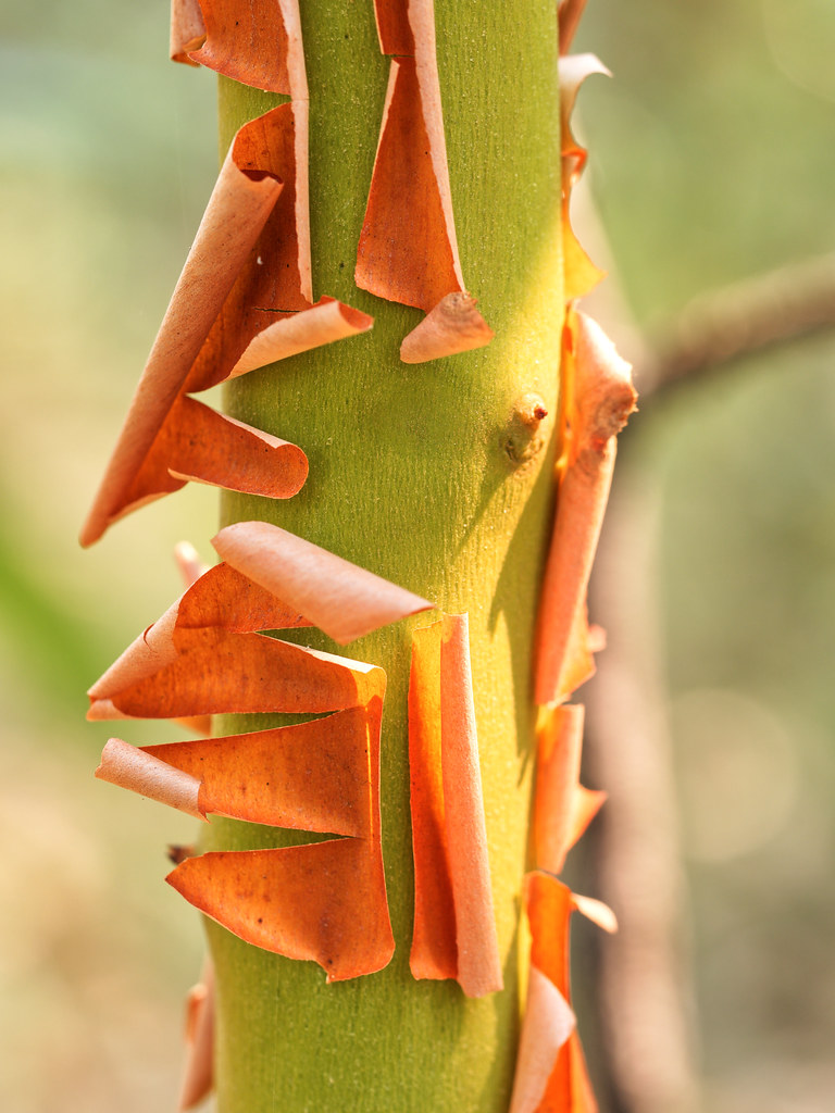 The World\'s most recently posted photos of bark and manzanita ...