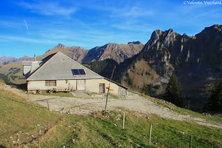 SF_IMG_8540 - Bremingard, alpine pasture farm, Gruyère region - Switzerland
