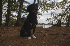 Little Sebago Lake (Makala's Photography) Tags: little sebago lake maine cabin dog dock nature island life webs high quality vibrant color sleeping condensation water pump clouds sky trees house window light