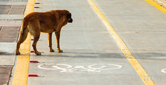 MATRIX DOG (Club Vortex) Tags: vi viñadelmar valparaiso salvaje perro dog doggo wildlife urban naturaleza nature canon canont5 chile chilean clubvortex